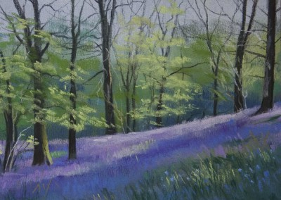 Bluebells, Penpont Wood